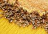 api in città Milano Green Week
