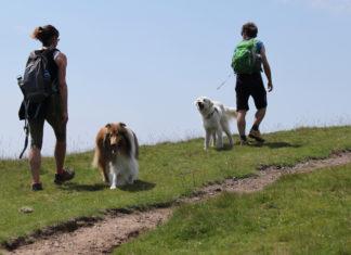La Plesio Trail & Dog Trail