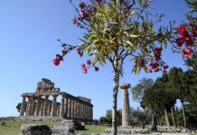 Paestum Tempio di Cerere