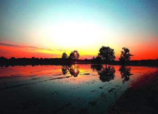 Lombardia Lomellina Risaie allagate
