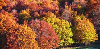 I faggi secolari delle antiche foreste del Parco Nazionale d'Abruzzo
