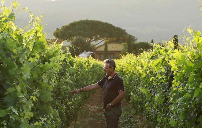 """Azienda vinicola """"Terre del Marchesato"""", Bolgheri"""